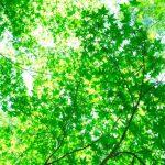 https---www.pakutaso.com-assets_c-2015-06-PAK86_miagerebamidori1226-thumb-1000xauto-16374